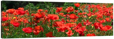 Red Poppy Field, Europe Canvas Art Print