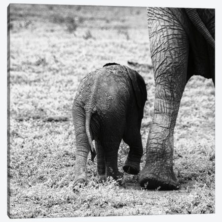 Mama and Baby Elephant II Canvas Print #ALD101} by Aledanda Art Print