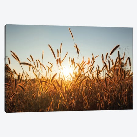 Morning Grain Canvas Print #ALD102} by Aledanda Canvas Print