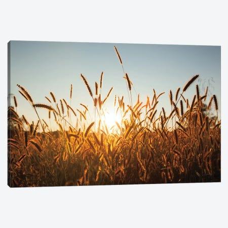 Morning Grain Canvas Print #ALD102} by Aledanda Canvas Print