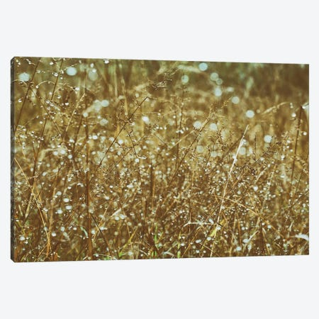 Dew On Grasses Canvas Print #ALD111} by Aledanda Canvas Artwork