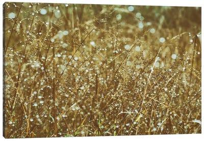 Dew On Grasses Canvas Art Print