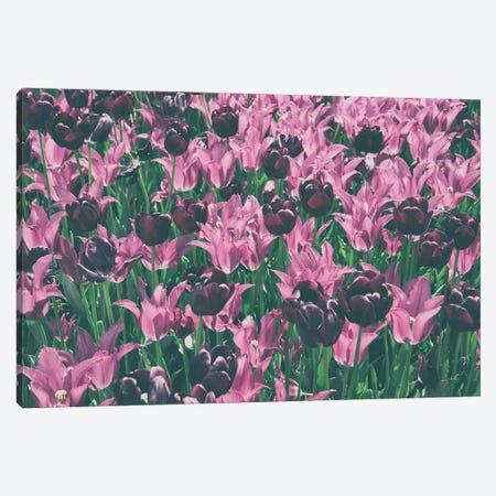 Tulip Botanical Canvas Print #ALD121} by Aledanda Canvas Art Print