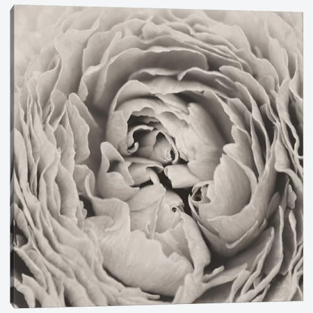 BW Peony Canvas Print #ALD25} by Aledanda Canvas Artwork
