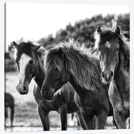 Horses Three Canvas Print #ALD26} by Aledanda Canvas Wall Art