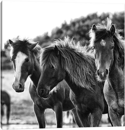 Horses Three Canvas Art Print
