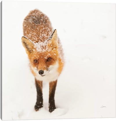 Red Fox I Canvas Art Print