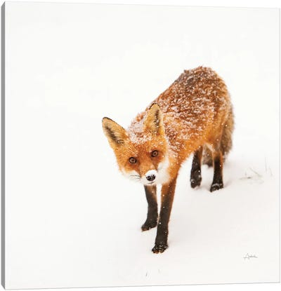 Red Fox II Canvas Art Print
