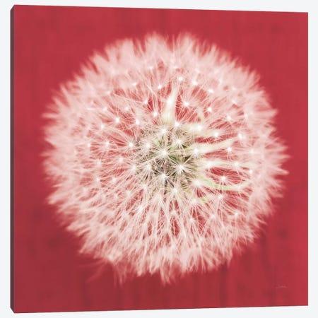 Dandelion on Red I Canvas Print #ALD48} by Aledanda Art Print