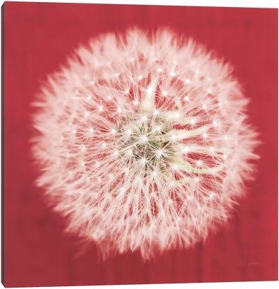 Dandelion on Red I Canvas Art Print