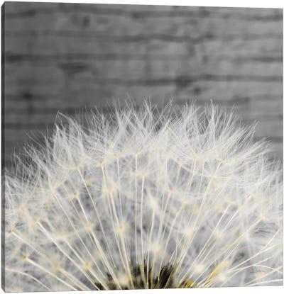 Delicate Dandelion Canvas Art Print