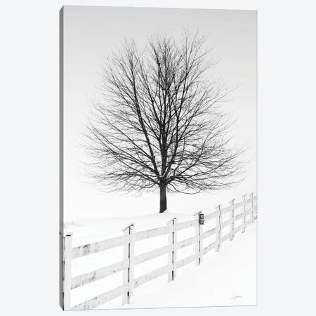 Along The Lane III Canvas Print #ALD4} by Aledanda Canvas Print