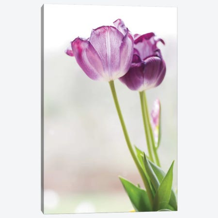 Tulip Time II Canvas Print #ALD54} by Aledanda Art Print
