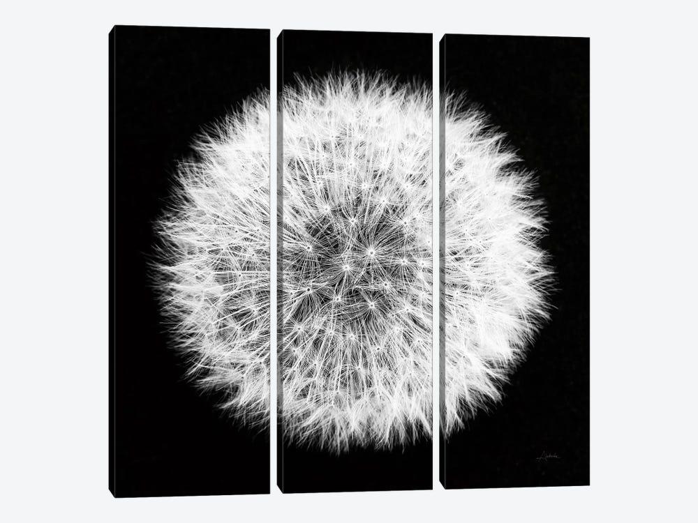 Dandelion on Black I by Aledanda 3-piece Art Print