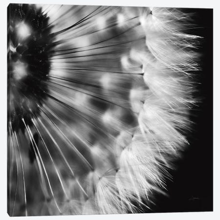 Dandelion on Black III 3-Piece Canvas #ALD57} by Aledanda Art Print