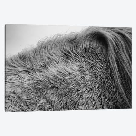 Horse Hair Canvas Print #ALD58} by Aledanda Canvas Wall Art