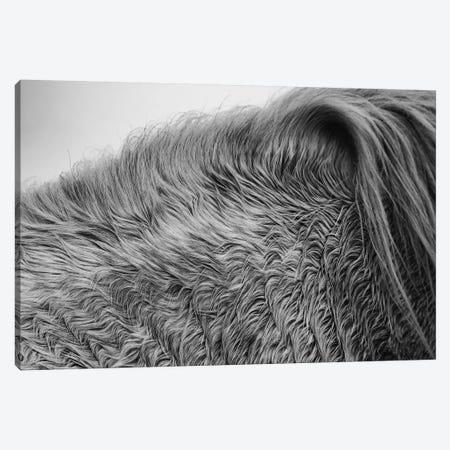 Horse Hair Canvas Print #ALD58} by Aledanda Canvas Wall Art