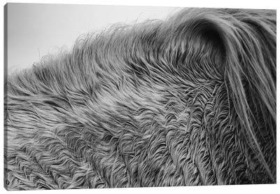 Horse Hair Canvas Art Print