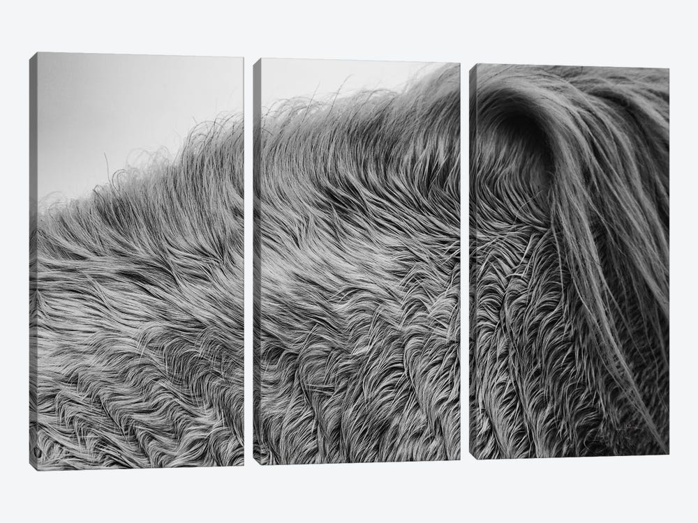 Horse Hair by Aledanda 3-piece Canvas Art Print