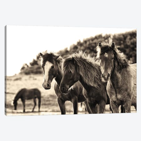 Horses Three Sepia Canvas Print #ALD59} by Aledanda Canvas Wall Art