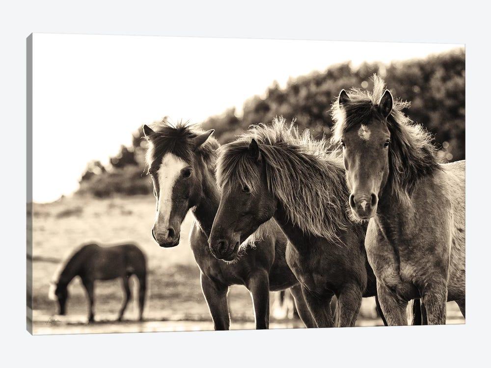 Horses Three Sepia by Aledanda 1-piece Canvas Wall Art