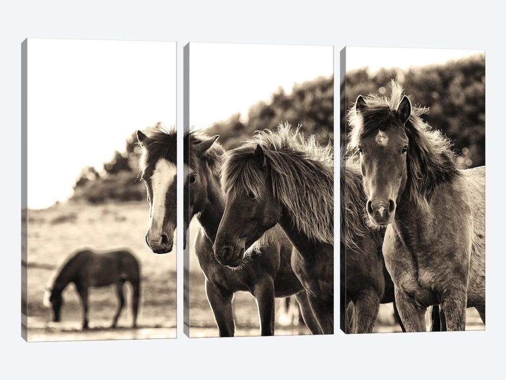 Horses Three Sepia by Aledanda 3-piece Canvas Art