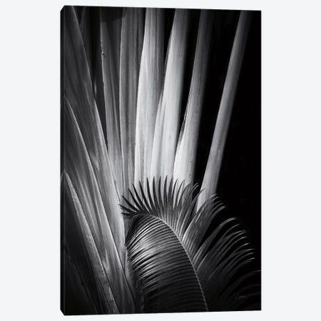 Tropical II Canvas Print #ALD62} by Aledanda Art Print