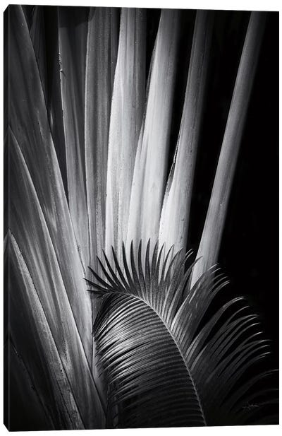 Tropical II Canvas Art Print