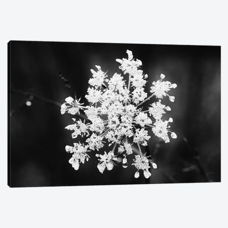 Diamond Brooch Canvas Print #ALD67} by Aledanda Canvas Art
