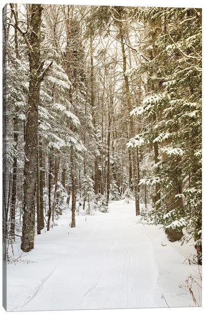 Through the Woods Canvas Art Print