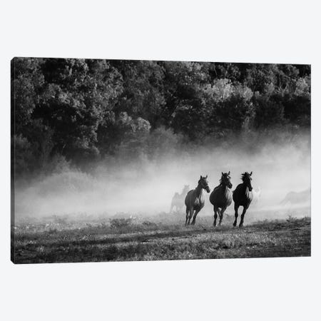 Horse Country Canvas Print #ALD9} by Aledanda Canvas Art