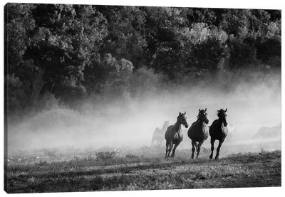 Horse Country Canvas Art Print