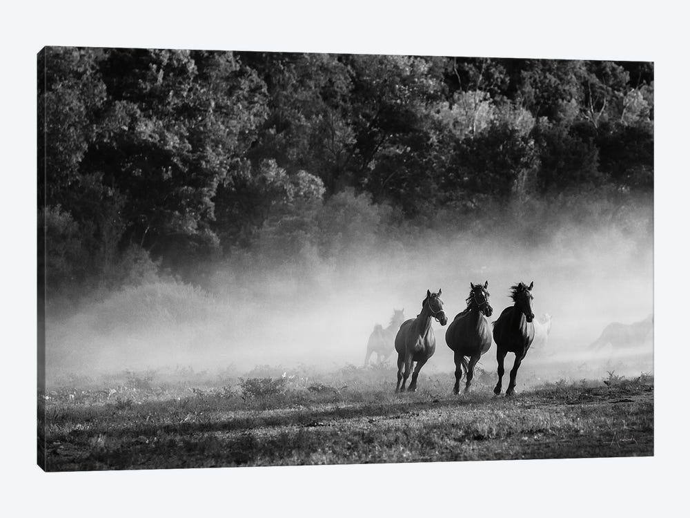 Horse Country by Aledanda 1-piece Canvas Artwork