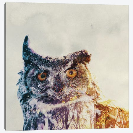 Owl Canvas Print #ALE107} by Andreas Lie Canvas Art Print