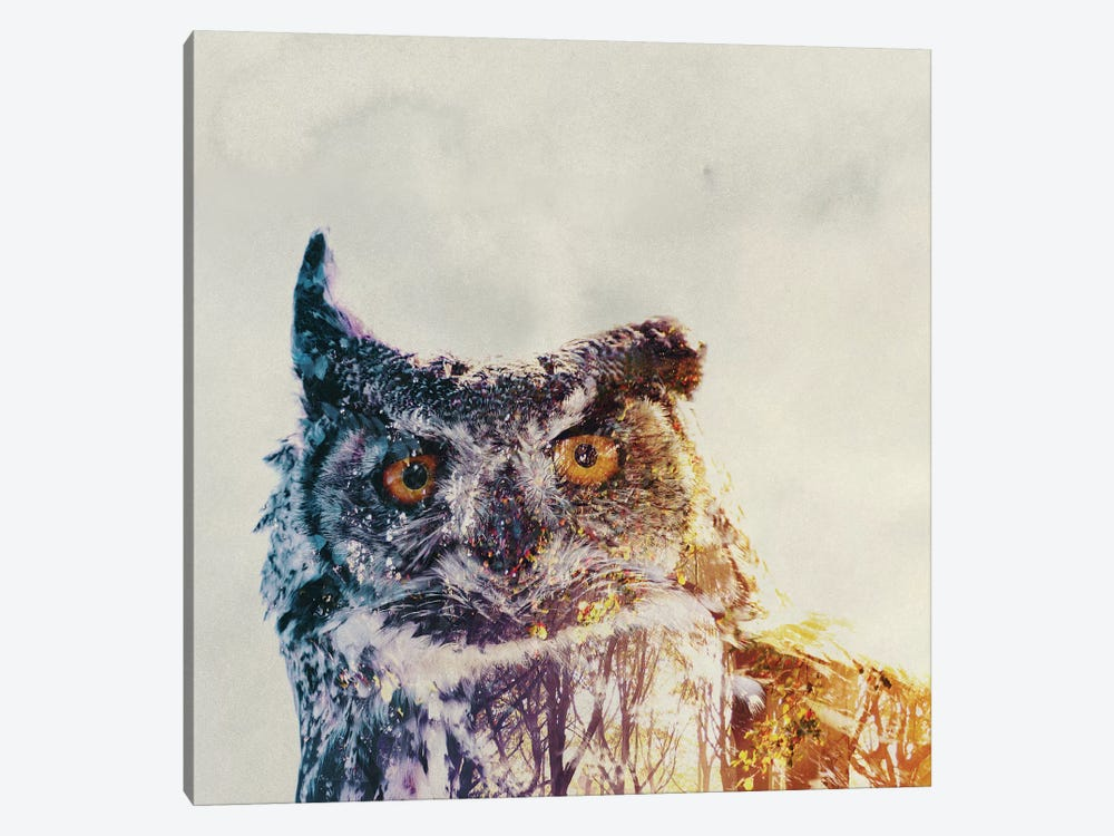 Owl by Andreas Lie 1-piece Canvas Artwork