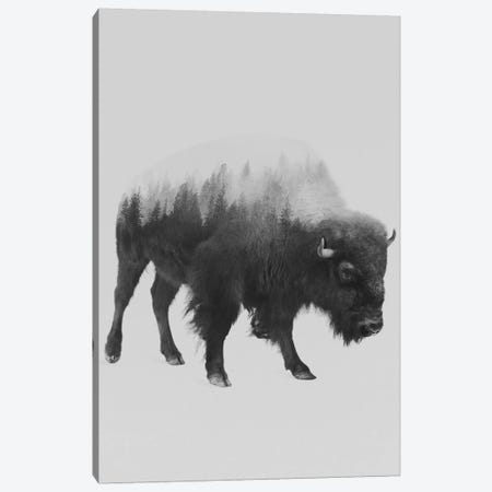 The Bison in B&W Canvas Print #ALE109} by Andreas Lie Canvas Wall Art