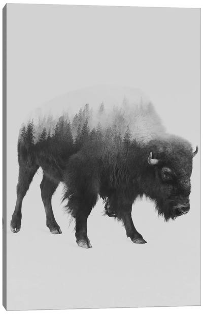 The Bison in B&W Canvas Art Print