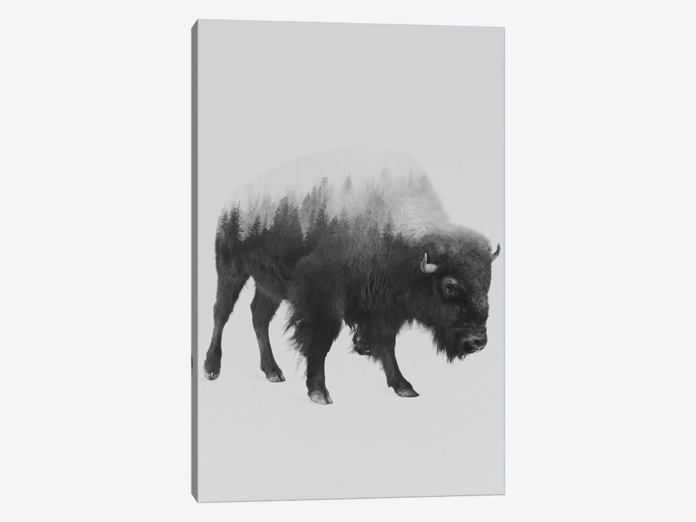 The Bison in B&W by Andreas Lie 1-piece Canvas Wall Art