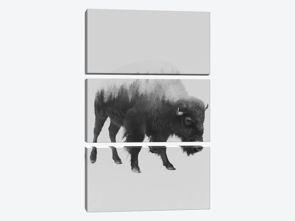 The Bison in B&W by Andreas Lie 3-piece Canvas Art