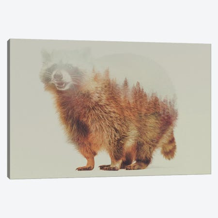 Raccoon Canvas Print #ALE10} by Andreas Lie Canvas Art Print