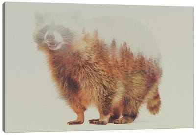 Raccoon Canvas Art Print