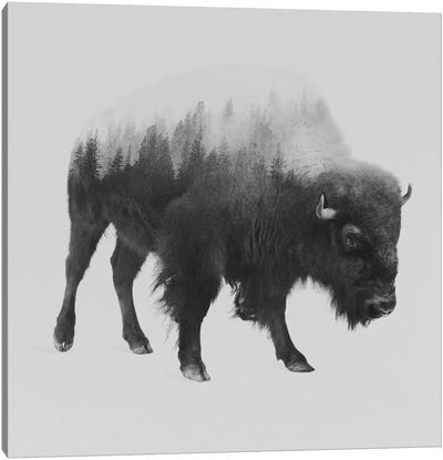 Bison I in B&W Canvas Art Print