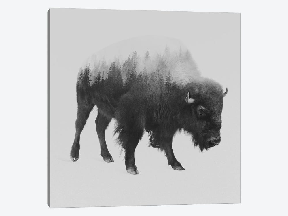 Bison I in B&W by Andreas Lie 1-piece Canvas Artwork