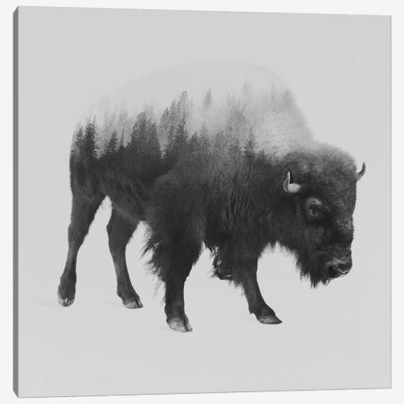 Bison I in B&W Canvas Print #ALE110} by Andreas Lie Art Print