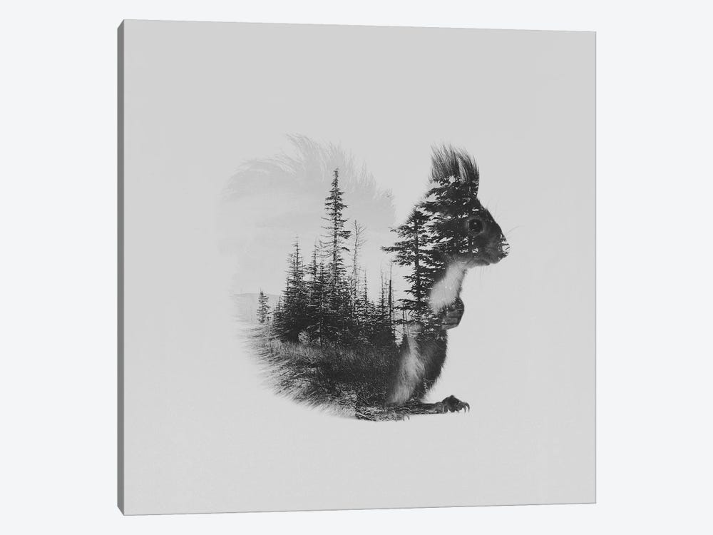 Ekorn II in B&W by Andreas Lie 1-piece Canvas Art Print