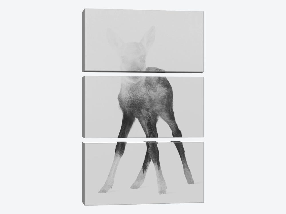 Fawn I in B&W by Andreas Lie 3-piece Canvas Art