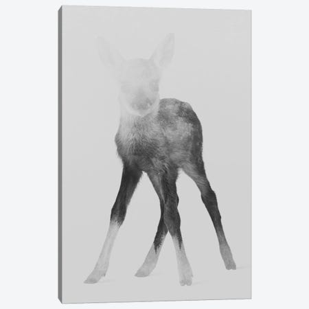 Fawn I in B&W Canvas Print #ALE116} by Andreas Lie Canvas Wall Art
