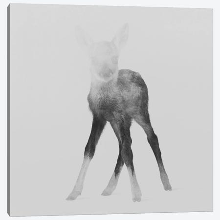 Fawn II in B&W Canvas Print #ALE117} by Andreas Lie Canvas Wall Art