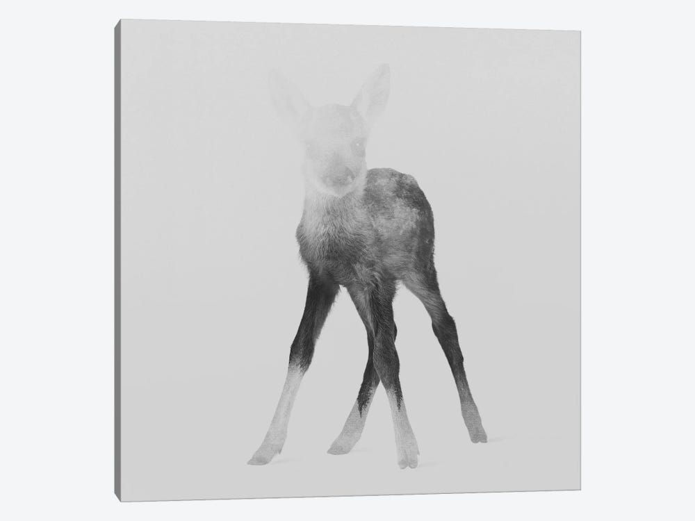 Fawn II in B&W by Andreas Lie 1-piece Canvas Art Print