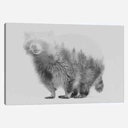 Raccoon I in B&W Canvas Print #ALE119} by Andreas Lie Canvas Print